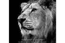 Leadership Motivational Posters