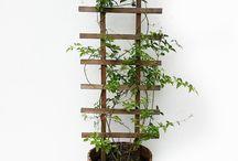 plantas en madera