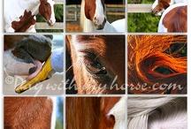Decor ideas for horse lovers
