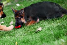 Dog training, games and activities / Dog training, tips and ideas