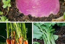 Dyrk mat og høst fra naturen