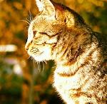 Cats & Kitten