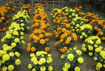 Advanced Nutrients / Advanced nutrients for your home garden to provide a better nutrition to fruits and flower plants.