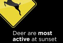 Sharing the Road with Deer / Tips from OnStar for sharing the road with deer during the fall season.