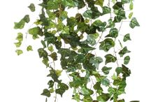 roślinki png