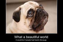 Puggie things / pug life