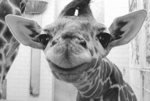 Animals!!(:
