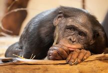 Monkey comedy videos
