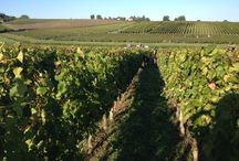 Harvest 2013 at Château Fombrauge / Grand Cru Classé - Saint Emilion