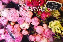 Weekly Roundups