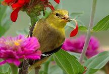 ✿•*¨`*• BIRDS .•*¨`*•✿