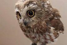 Ref_owl