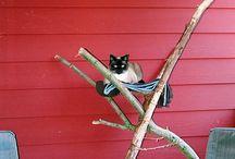 new cat to gondor