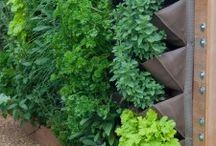 Cosas que adoro de la jardinería / gardening