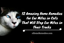 Home Remedies for Cats / As a cat owner and lover I want to make sure that I share home remedies for cats with you.