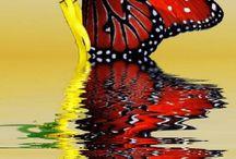 Butterflys / Sommerfugler