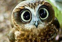 an owl dung dung <3