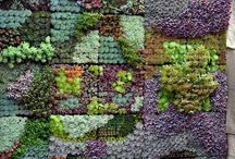ogród w malu