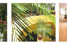 Jardinería Interior