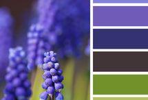 Colores: paletas
