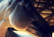 Beautiful Creatures - Horses