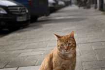 Feline encounters / Gotta love cats