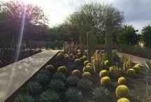 Gardens at Sunnyland / Desert Scape