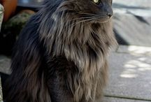 NFC and black cats / cats