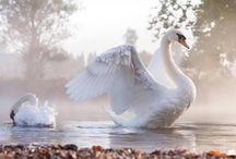 White swans, black swans