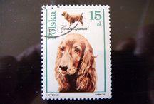 psy na znaczkach