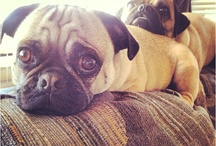 Pug Loveee / by Samantha Craner