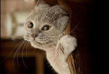 cat memes / cats