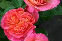 Gardening Inspiration & Ideas