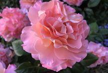Mon jardin cheri :)