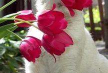 Gatos Brancos