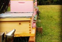 Tomball Bee Yard