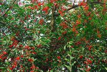 Огород / Здесь размещается информация о выращивании   баклажанов, перцев, томатов, дынь, арбузов, ягодных кустарников и всего, что растет на даче.