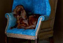 doglovin' / by Marcella Wright