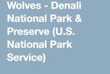 Denali Wolves / Information and News about wolves in Denali National Park