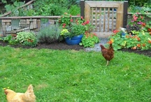 Love The Farm / by Charlene Hornbaker Mulcahy