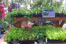 Vegetable Plants & Displays