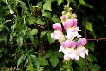 flowers-my photo