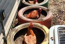 Chickens Coop