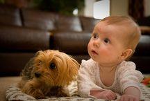 #Aprende - Todo sobre tu perro / Notas didácticas que te enseñaran todo sobre tu perro, salud, comportamiento, alimentación, adiestramiento y más!