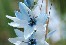 Fotografie bloemen