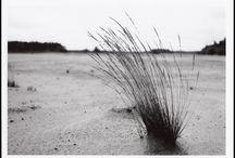 photography - analogue