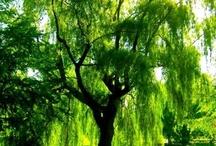 i dig trees / by Brian Stewart