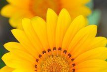 I ❤ yellow