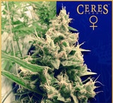 Ceres Seeds