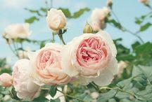 Flower Power / by Leigh Ann Loggins